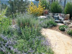 Great Native Plants for San Diego Recommended by Greg Rubin - See more at: http://www.pacifichorticulture.org/articles/landscaping-with-natives-in-san-diego/#sthash.pOLxnDus.dpuf