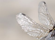 glistening wings//