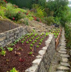 Backyard Landscaping Hillside Garden Beds Ideas For 2019 Terrace Garden Design, Hillside Garden, Vegetable Garden Design, Garden Beds, Terraced Garden, Sloping Garden, Vegetable Gardening, Garden Fencing, Garden Path