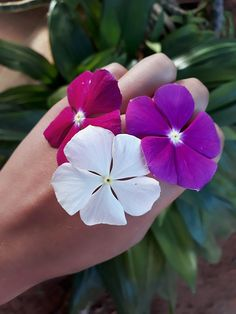 🥀🌼🌸🐝 Girls With Flowers, Love Flowers, Spring Flowers, Hand Photography, Some Ideas, Natural, Rose, Plants, Roses