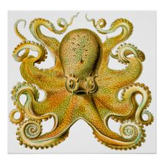 Octopus in Yellow by Ernst Haeckel - one of my absolute favorite illustrators.