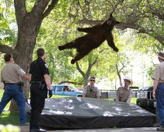 The bear falling from the sky | The 50 Best Animal Photos Of 2012