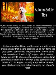 Autumn Safety Tips