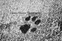 Paws for sale by CiearraCharisse on Etsy