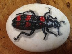 Hand-Painted+River+Rocks | Hand-Painted+River+Rock+From+Thailand+Bug+Beetle+Black/Red+ ...