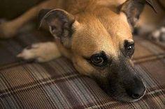 La diarrea en perros es un caso común de visitas al veterinario, es un síntoma frecuente de muchas enfermedades.