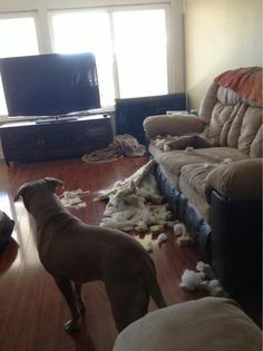 The couch exploded