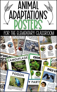 Animal Adaptations posters and worksheet set! Perfect for elementary students to accompany their study of animals. Up Teacher, Teacher Tips, Teacher Stuff, Reading Passages, Reading Comprehension, Teaching Science, Science Fun, Science Education, Health Education