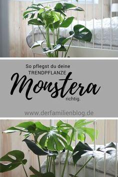 26 absolut pflegeleichte zimmerpflanzen f r anf nger pflegeleichte zimmerpflanzen. Black Bedroom Furniture Sets. Home Design Ideas