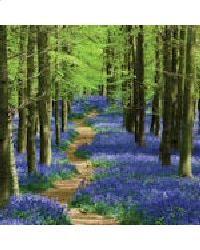 Landscape Photography Tips: Spring landscape photography tips 5 - bluebells Beautiful World, Beautiful Places, Beautiful Pictures, Beautiful Forest, Beautiful Scenery, Beautiful Flowers, Forest Path, Forest Trail, Forest Garden