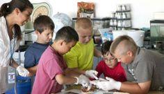 Electricity Merit Badge Summer Camp Milwaukee, Wisconsin  #Kids #Events
