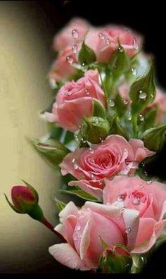 Grazie dei fiori.
