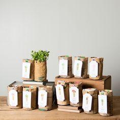 Medium Organic Garden Kit - Magnolia Market | Chip & Joanna Gianes - Basil, Cilantro, Parsley, & Mint - $50 + shipping