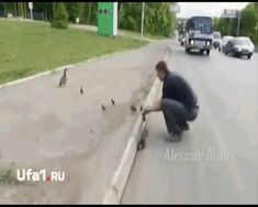 Not leaving behind any of these ducklings... | These Videos Of Humans Rescuing Animals Will Make You Tear Up