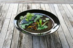 Miniature Koi Pond in Beautiful Black/ Dark Brown by rezinology, $45.00