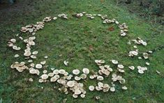 Wicca, Fae Aesthetic, Spring Aesthetic, Fantasy Magic, The Ancient Magus Bride, Fairy Ring, Faeries, Folklore, Stuffed Mushrooms