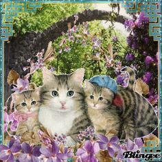 I Love Cats, Cute Cats, Kitten Cartoon, Kitten Images, Angel Images, Most Beautiful Animals, Cat Boarding, Cat Gif, Pet Birds