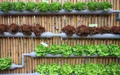 Проект « Дачники » дача | сад | огород