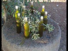 (635) Φρέσκο αγουρέλαιο - www.mellofarm.gr - YouTube Youtube, Plants, Plant, Youtubers, Youtube Movies, Planets