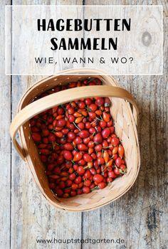 Ich verrate Dir, wann Du am besten Hagebutten für eine leckere Marmelade sammeln kannst und ich gebe Dir mein Rezept, das auch ohne Entkernen funktioniert.