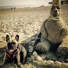 We love this #centralcoasting photo of our friend @stellatheprettyfrenchie.  Check out that sand bear!  #california #beach #sandart #travel #frenchie