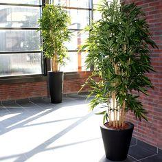 De meest natuurgetrouwe kunst Bamboe bomen vindt u bij Maxifleur Kunstplanten. Hier geplaatst bij een projectbeplanting van een VvE in luxe kunststof plantenbakken.
