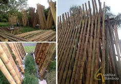 Guadua Bamboo Poles located in Buga, Colombia, shows how they grow harvest and ship their bamboo to the US for construction poles.