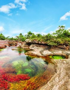 The Liquid Rainbow River Caño Cristales, Colombia - Colombia, Republic of Colombia, is a country situated in the northwest of South America - Places Around The World, Oh The Places You'll Go, Travel Around The World, Places To Travel, Travel Destinations, Places To Visit, Around The Worlds, Travel Tourism, Rainbow River