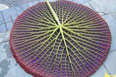 10 estonteantes fractais encontrados na natureza