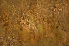 Camouflaged in the grass   Kalyan Varma