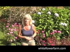 How to Grow Roses | Plant Seeds, Bulbs & seedlings for Sale