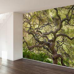 Japanese Maple  Paul Moore Removable Mural   WallsNeedLove