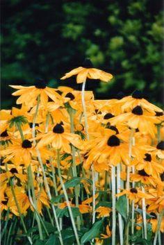 Landscaping Plants, Outdoor Landscaping, Outdoor Decor, Arkansas, Arizona, Green Life, Cool Plants, Native Plants, Dream Garden