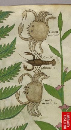 Detail of a miniature of crabs and a scorpion.   Origin:Italy, N. (Lombardy)
