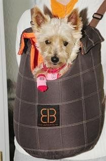 $34.95-$49.99 Lenis PackFront / Back Pet Carrier   Cute pet carrier bag in checkered-stitching coffee suede & orange nylon fabric inside attached with easy to use velcro closure.    Weight limit:  Small 5lb  Large 8lb