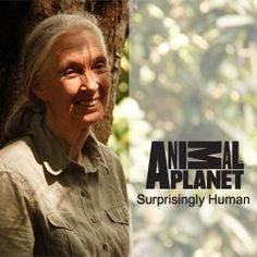 Jane Goodall in Gombe National Park Jane Goodall, Excursion, National Geographic, Famous People, National Parks, Friends, Animaux, Amigos, Boyfriends