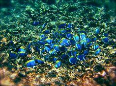 Diving, Seychelles, underwater