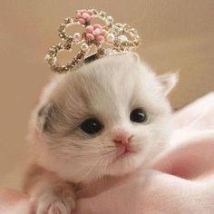★ My little princess~ ★