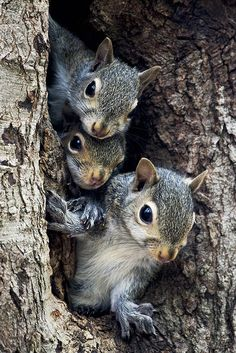 A Squirrels Family Tree