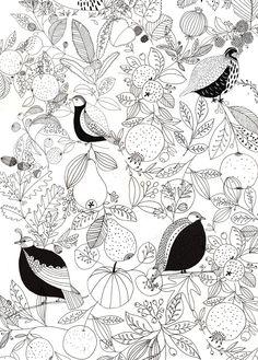 #Birds #illustration