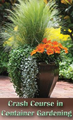 Container Gardening – Use This Advice To Become An Organic Gardening Expert – DIY Gardening Ideas Working on the ground can be very hard on your knees. To view further for this article, visit the image link. Flower Pots, Plants, Growing Flowers, Container Flowers, Organic Gardening Tips, Flower Garden, Hydroponic Gardening, Container Gardening, Garden Design
