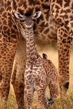 Fotos de animales salvajes
