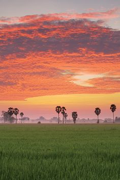 Sunrise in Rice Field, Uthaithani, Thailand