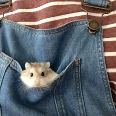 Awww i want this so i can carry my lil' hamster round Cute Creatures, Beautiful Creatures, Cute Baby Animals, Animals And Pets, Hamster Russe, Cute Hamsters, Fur Babies, Rodents, Aesthetics