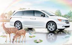 Re-pin if you break for rainbows…and animals too. #Honda #Odyssey