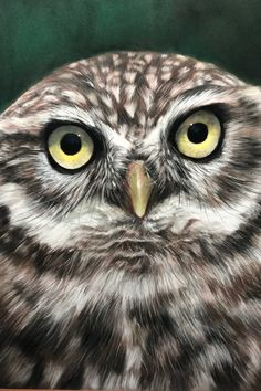 Owl, Bird, Animals, Animaux, Owls, Birds, Animal, Animales, Animais
