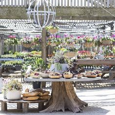 """""""If you can't make it to @shopterrain in person (sigh), follow their feed for spring blooms and garden inspiration galore / #regram from their Styer's…"""""""