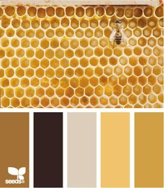 honey gold color palette - by design seeds Colour Pallette, Color Palate, Colour Schemes, Color Combos, Gold Color Scheme, Gold Palette, Design Seeds, Ok Design, Honey Colour