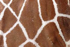 animal textures-giraffe fur