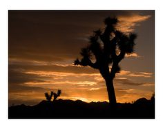 Desert Sunset Pictures, Photos and Posters